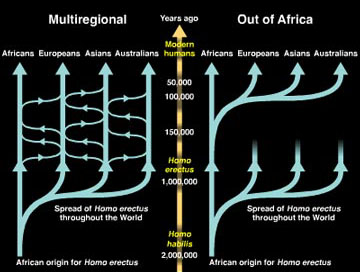 """out of africa or multiregional theory essay The """"out-of-africa"""" theory vs the multiregional theory- the origin of mankind posted april 13, 2017 by marie tano under student research, the blog despite the earth's existence for over 46 billion years, many debates still cover its being, especially concerning the earth itself as well as its inhabitants."""
