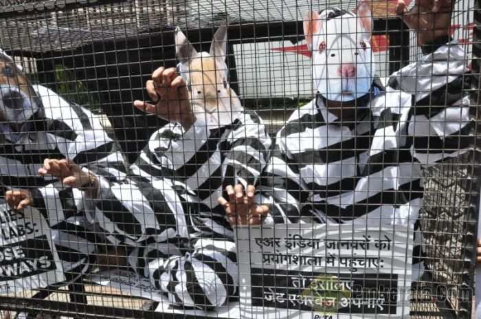animal-rights-activists-wearing-prisoner-suits-69805