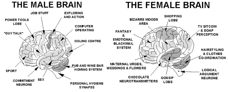 vs female brain differences Male