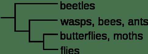 663px-Cladogram-example1