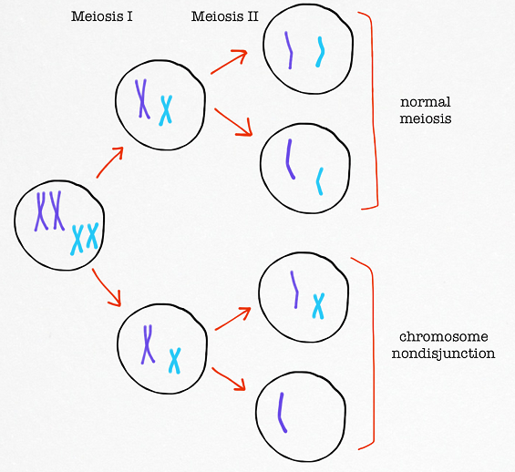 chromosome_nondisjunction_meiosis